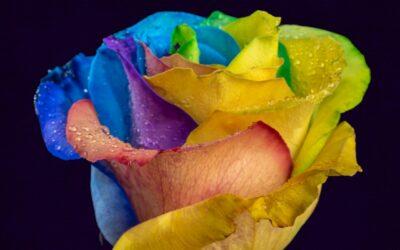 Zijn tye dye, dip dye en batik mogelijk?
